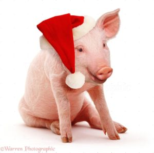 Pink Pig Wearing A Santa Hat Photo - Wp37416 regarding Christmas Pig - www.researchpaperspot.com